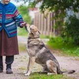 German Shepherd DOG Owners