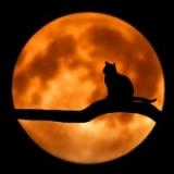 Black Cat Companions