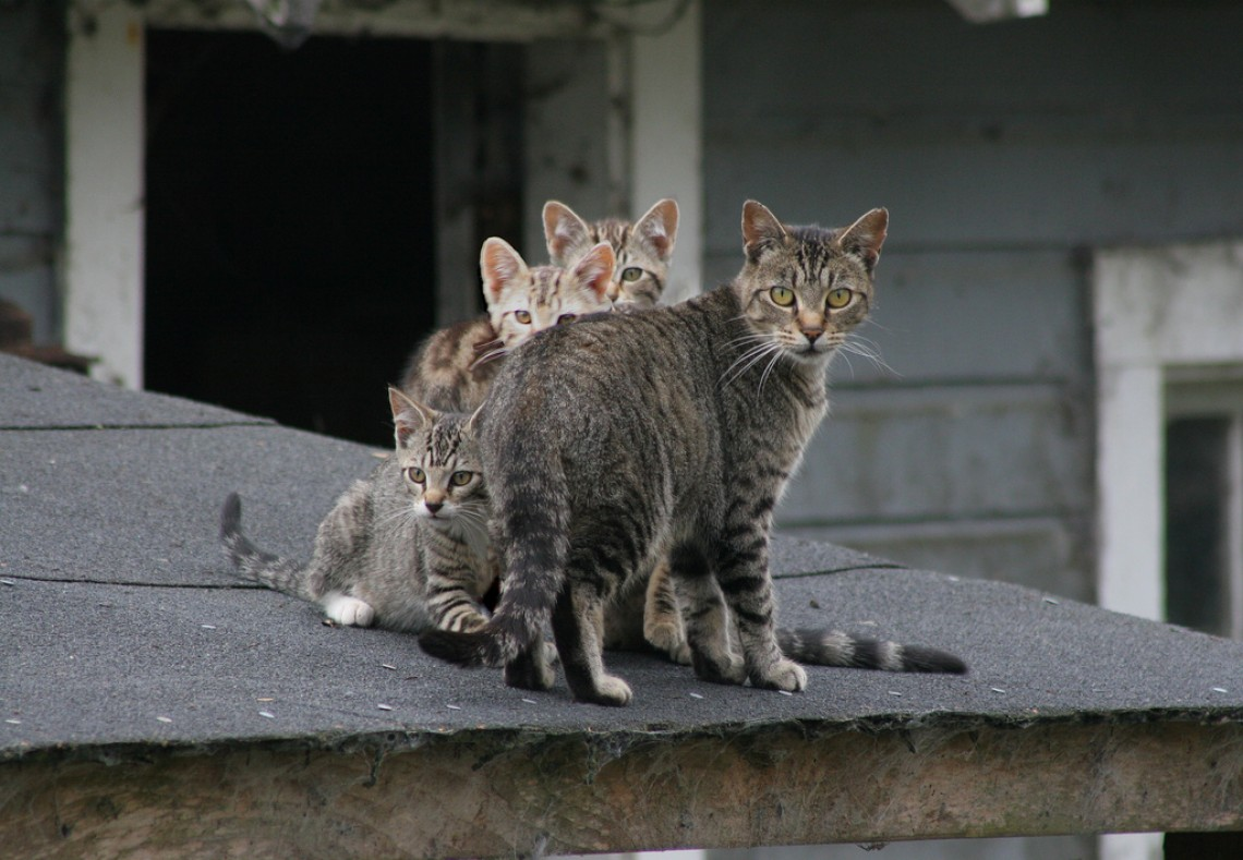 The TNR Coalition of Greater Los Angeles County