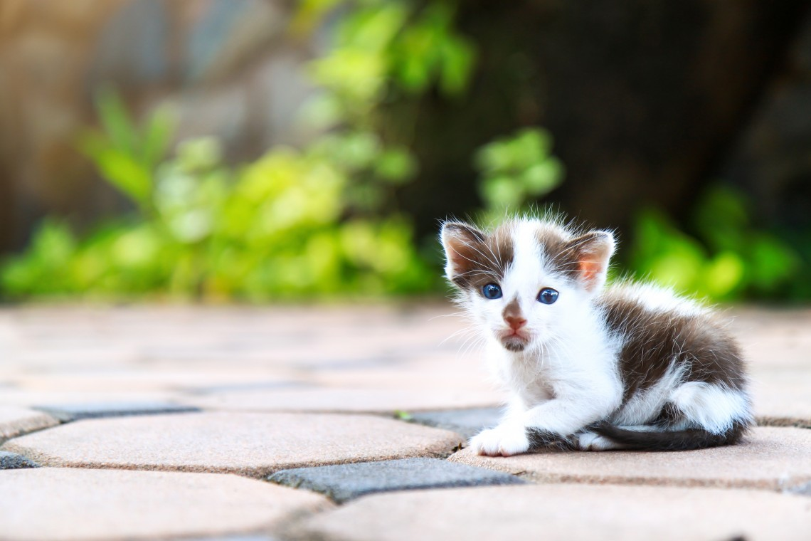 The Cat Feeders Colony