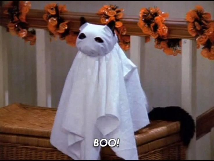 another day closer to halloween!