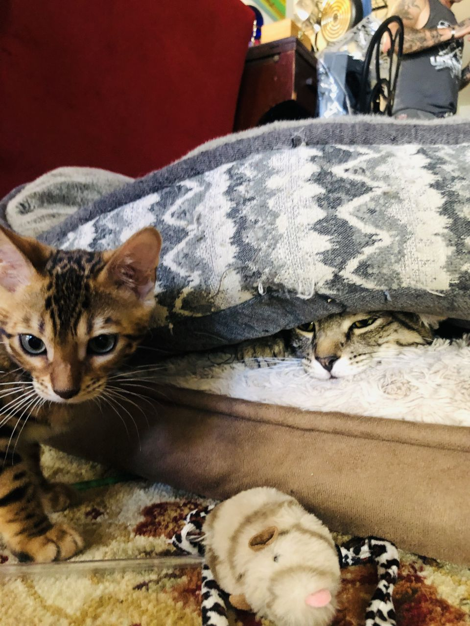 I think I finally figured out how to post to Lufa. These are my 2 cats. One is very young and crazy, she's a Bengal and her name is Josie.  The other cat is Brodie, and he's hiding from everyone and I relate because I do that a lot myself.