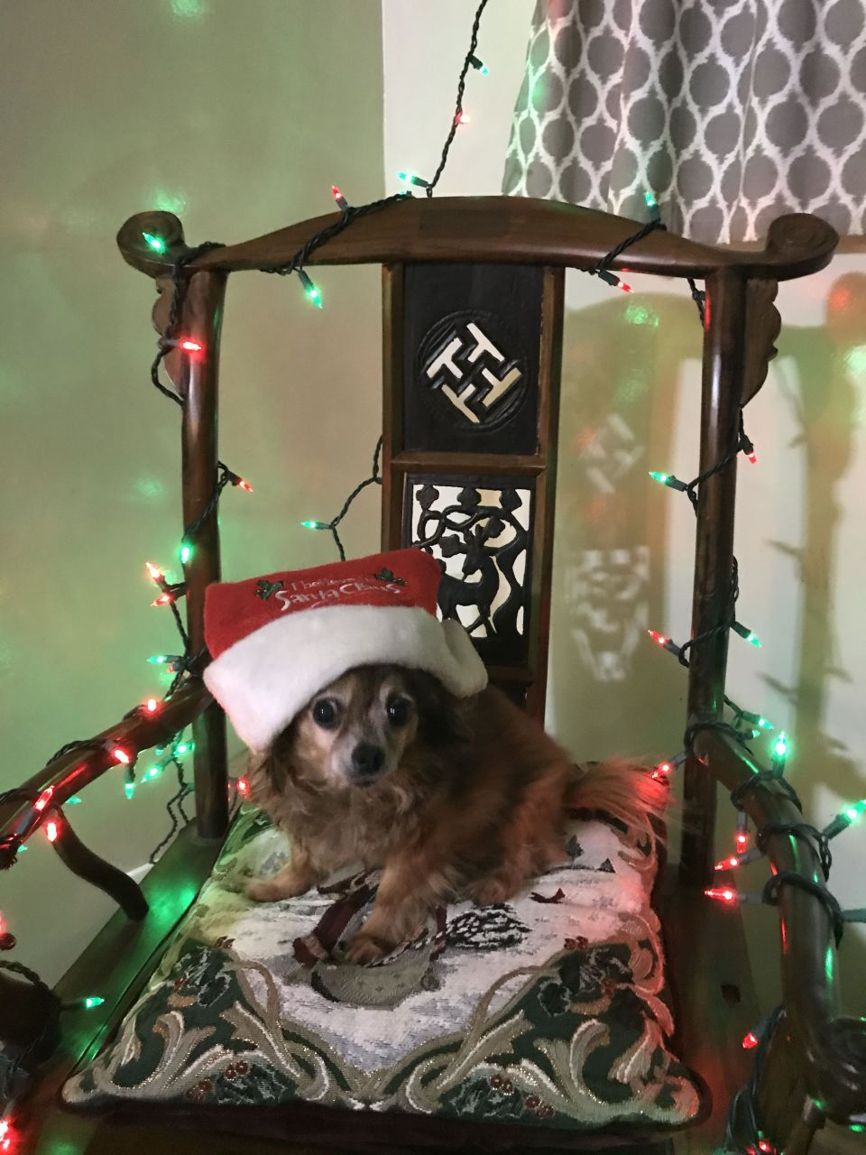 Only 88 days to Christmas. Furbi is ready and is sitting in the Chair of Cheer.