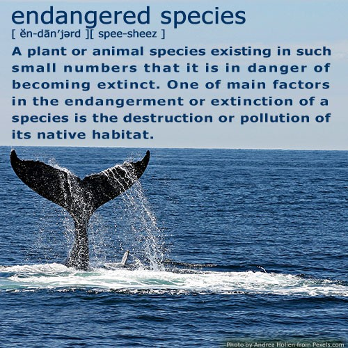 https://www.dictionary.com/browse/endangered-specieshttps://www.fws.gov/endangered/laws-policies/https://www.nwf.org/Educational-Resources/Wildlife-Guide/Understanding-Conservation/Endangered-Species#TheMoreYouKnow