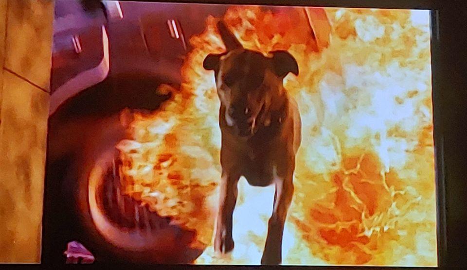 Name that movie!?!#DogLife #CaptionThis #ThrowBackThursday