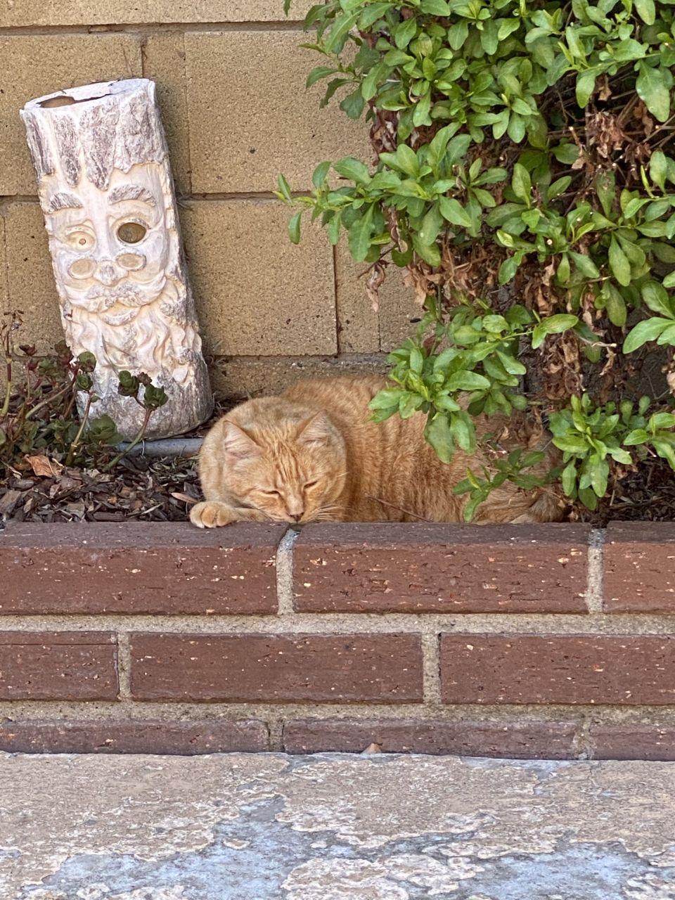 My favorite cat, pickle ❤️
