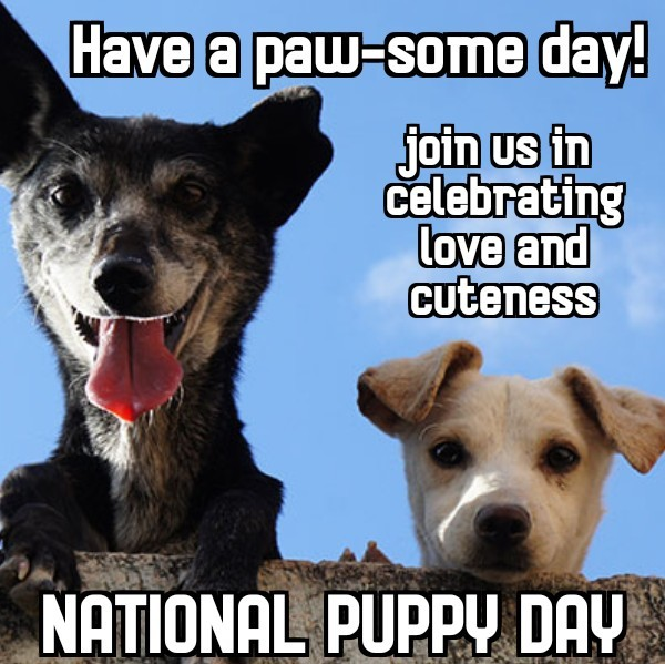#PuppyPower #DogLifePlease share photos stories, and all that is puppy related today as we celebrate #NationalPuppyDay