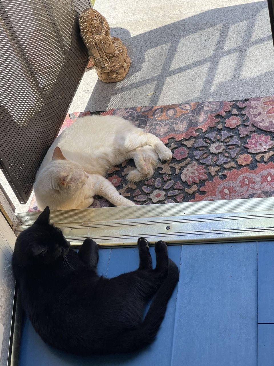 Matter and Anti-Matter, don't touch kitties!!!!