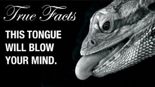 True Facts: Snake and Lizard Tongues