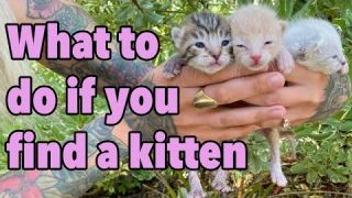 What To Do If You Find a Kitten -- How to Make the Right Call!