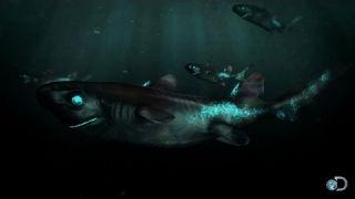The Lantern Shark Glows in the Dark   Alien Sharks
