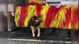 Dog on carwash (free massage feel so good ah)